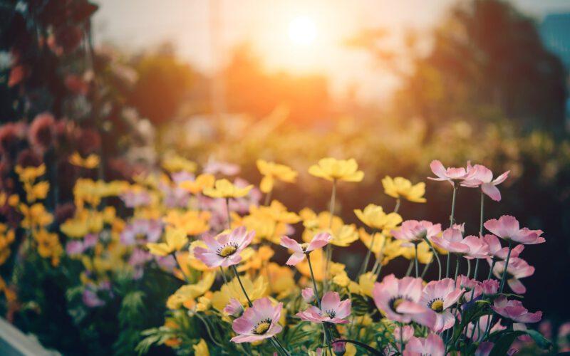 Tajemniczy ogród babci – rozsadzanie warzyw i kwiatów