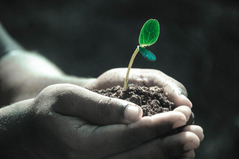 Naturalne środki ochrony roślin